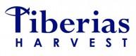 Tiberias Harvest